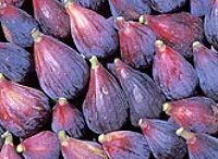 Growing figs  (Higos)