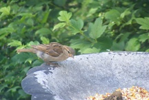 Birds -My Pictures / by Debra Browning