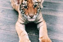 ∆ safari ∆