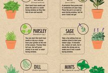 Herbs that can grow at home
