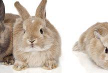 roditori, conigli