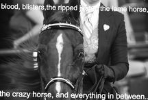 Words of an Equestrian