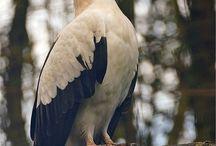 Love Birds!!1!