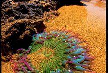 Life beneath the ocean