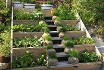 Hage og uteområde / Gardening