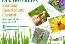 Ontario Nature's Summer Insect Photo Contest / The long hot days of summer are here and so is Ontario Nature's insect photo contest!  Don't miss a beat, learn how you can win prizes and start a buzz. Enter your insect photos to Ontario Nature's Summer Insect Photo Contest: www.ontarionature.org/connect/blog/ontario-natures-summer-insect-photo-contest/