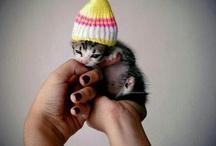 Sweet-Sweet Kittens