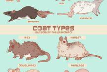 szczurole