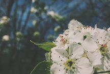 Çiçek reeimleri