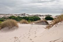 Doñana National and Natural Park / Daily Trips from Seville
