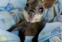 Animals I love