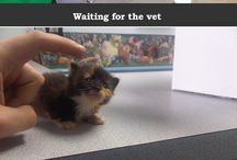All Creatures Great and Small <3 / Various Pins on Cute animals, Vet Med, Careers, College, Cute animal stories, and about everything else you can imagine about the Vet Med career. / by Kaitlyn Taylor