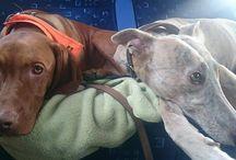 Utazás kutyával