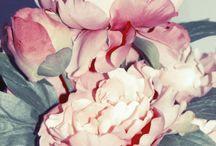 Colour! / by Joanie Reid