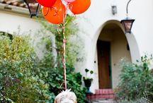 Westwing • Honden / Vind hier leuke plaatjes van onze favoriete trouwe huisdier: de hond! Van grappige plaatjes tot innovatieve hondenmanden. Je vind het allemaal hier! Voor meer inspiratie: westwing.me/shopthelook