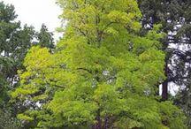 arbres / by Caro S