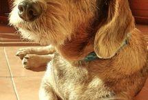 Aldi dog
