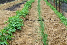 Hickery Holler Farm / The farm I call home and the blog that follows it's day to day growth / by Canned Quilter