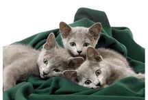 Cats - love them (Please adopt) / by Ginger DiGalbo Katz