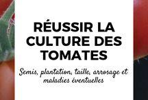 Culture potagère