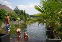 Tuin met zwemvijver / Droomt u van een zwemvijver in uw tuin waar u elk seizoen van kunt genieten? Bij ons hoveniersbedrijf kunt u zo'n heerlijk natuurbad vrijblijvend komen bekijken én advies ontvangen over de mogelijkheden voor uw eigen tuin.  Deze tuin is aangelegd door: Van Amerongen Boomverzorgers & Hoveniers!