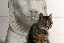 кот и скульп