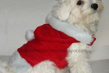 glamour pooches  / Every thing for the special pooch in your live