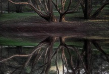 Trees-Givers of Beauty and Joy / by Amy Huber-Fees