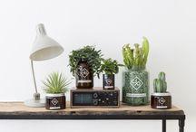 Plante Pinterest