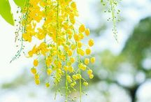 Summer Green and Yellow