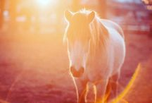 Beauty of the Horses
