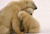 Bears / by Kristi Nicholas