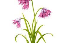 Flower flora art
