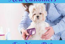 Dog grooming ideas / Dog grooming business