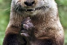 squirrels and otter animals