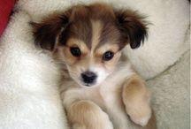 Cute / Cute