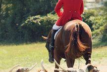 horse hunting - hubertus