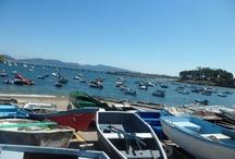 Ría de Vigo | Sea Life / La ría de Vigo es uno de los lugares más hermosos de la costa española y esconde uno de sus mayores paraísos: las espectaculares Islas Cíes.