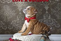 Love a Bulldog ! !