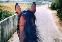 Horse,love it!