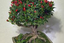 bonsaiiii