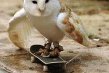 Animals/Dyr / Bilder av søte skapninger. cute animals