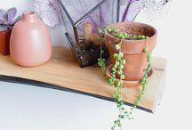 Plants / by Shirley Hendrickson