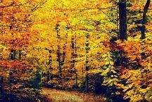 My Joli Autumn