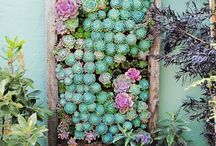 Succulents! / by Elissa