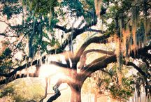 Cool Trees / Trees from the record books ... and those that just make us stop and stare.  / by The Davey Tree Expert Company