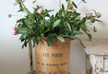FLOWER : Paenoia / Pivoines - Peonies