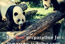 Pandaloon Quotes