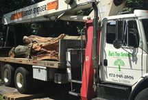 Tree Removal Companies Mount Olive NJ
