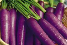 carrot purple